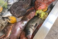 Fresco e incredibilmente fotogenico: è il pesce monopolitano