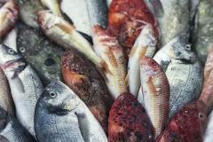 A Gallipoli il pesce fresco è una vera opera d'arte