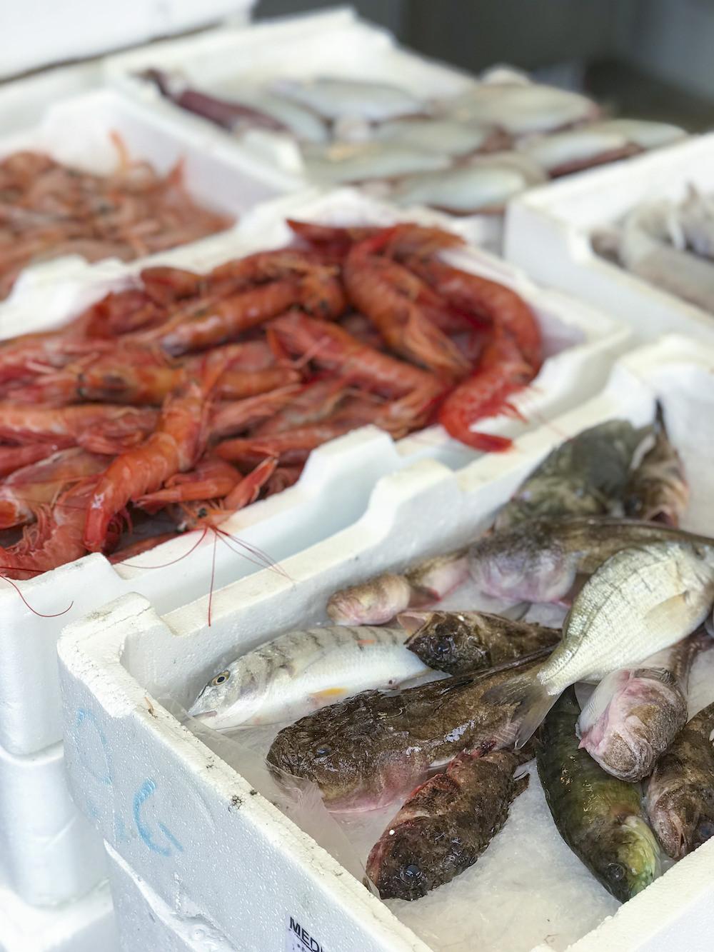Pesce porto Gallipoli